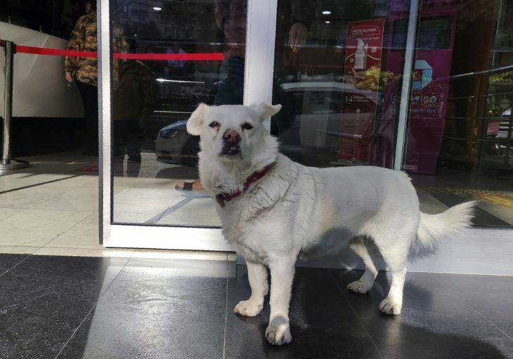 Napokig várta beteg gazdáját a kórház előtt egy kutya
