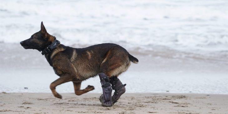 Bátorságáért tüntettek ki egy közel-keleti katonai akcióban résztvevő kutyát