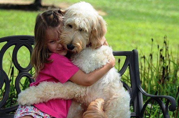 A kutyák nem szeretik, ha átölelik őket?