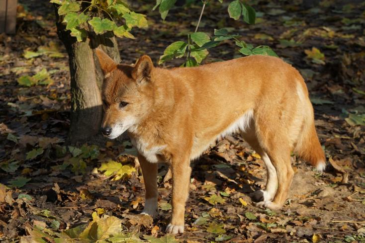 Hónapokon át hitték kutyakölyöknek a talált állatot, de valami egészen más volt