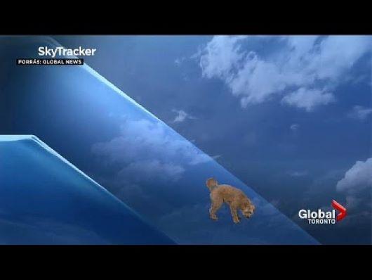 Kutya trollkodott meg egy időjárásjelentést a kamerák előtt (VIDEÓ)