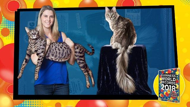Két Guinness-rekorder macska tűnt el egy lakástűzben
