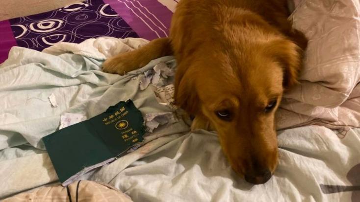 Kutyája menthetett meg egy nőt a gyilkos koronavírustól