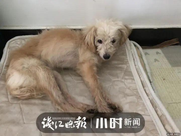 Közel60 kilométert gyalogolt hazáig a kutya, akit a gazdái a benzinkúton hagytakvéletlenül