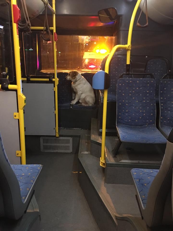 Buszra menekült a petárdák elől a megrémült kutya