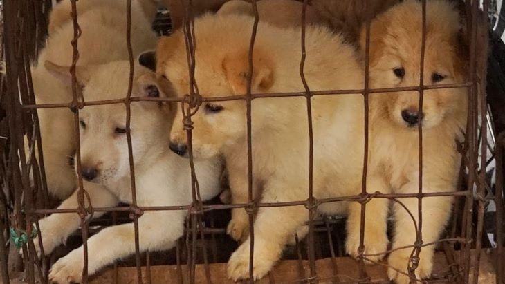 Megnyílt a kutyahúsfesztivál a kínai Julinban a koronavírus-járvány ellenére