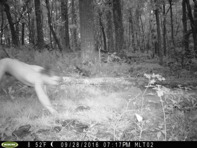 """""""Szibériai tigrisként ugrándozott az erdőben egy LSD-vel megáldott libereci ficsúr"""""""