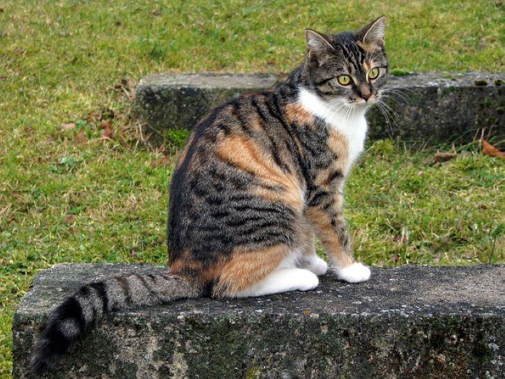 Tizenkét év után került elő egy családi nyaraláson eltűnt macska - FOTÓ