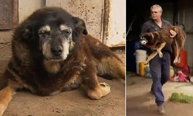 Meghalt Maggie, a világ legidősebb kutyája