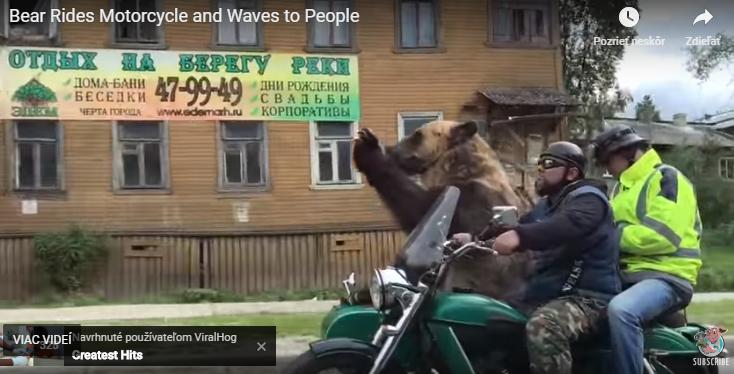 Hopp, egy bukósisak nélküli, izé. Medve! (videó)