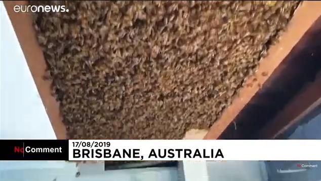 Óriási méhkaptárnyi méhet távolítottak el egy ház tetőszerkezetéből (VIDEÓ)