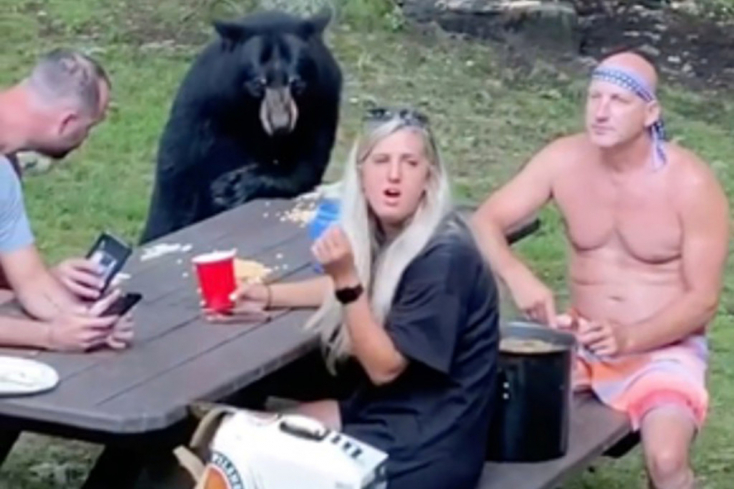 Hátborzongató: Békésen piknikezett a család, amikor melléjük szegődött egy medve – VIDEÓ