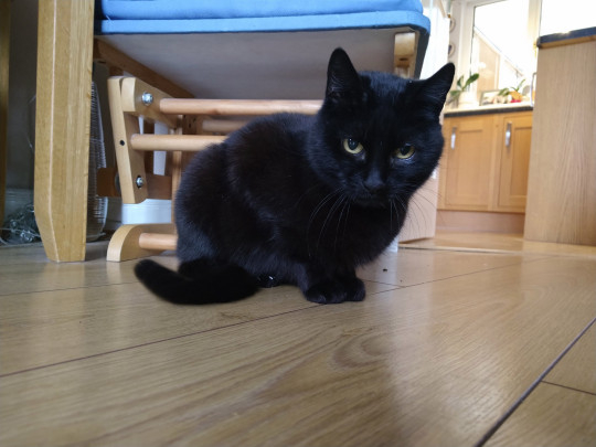 Eltűnése után négy évvel tért haza egy macska