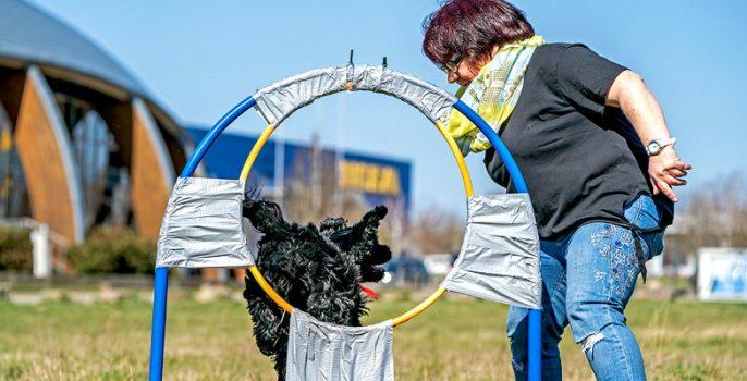 Világrekordot állított fel karikaátugrásban egy kutya Németországban