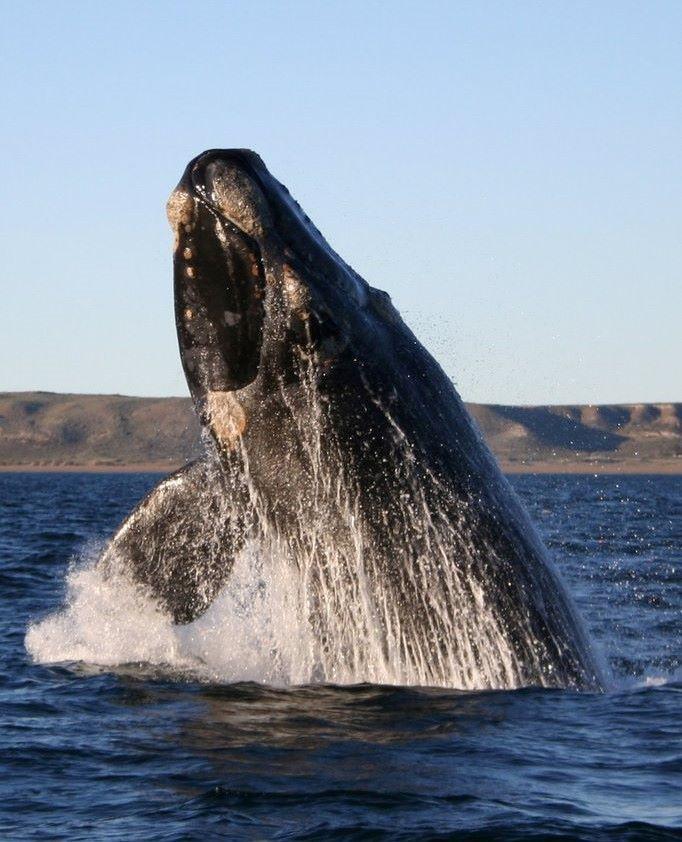 Négyméteres bálnát szabadítottak ki a Temzéből (VIDEÓ)