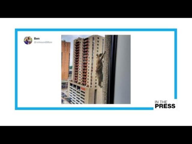Mosómedve mászott fel a 23 emeletes irodaház tetejére