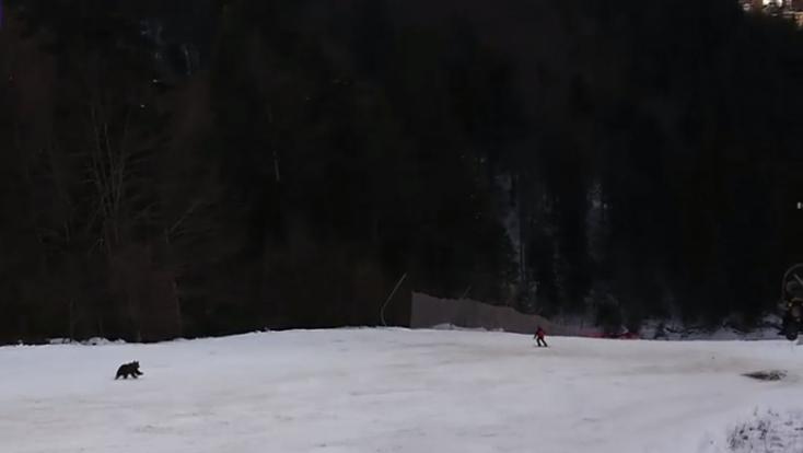Nem vette észre a síelő, hogy kergeti őt egy medve - a felvonóban ülők figyelmeztették őt (VIDEÓ)